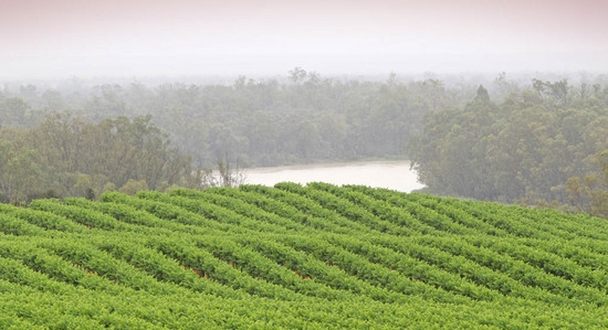 Murray River Wineries